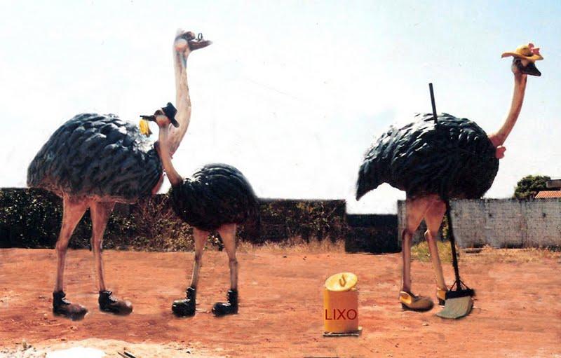 Ema Aves em fibra